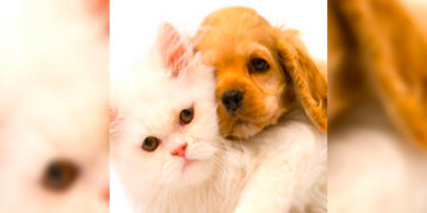 Eliminacion-de-las-pulgas-de-las-mascotas