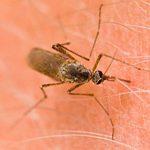 Sindrome-de-Skeeter-Eres-alergico-a-los-mosquitos