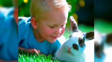 Terapia-con-animales