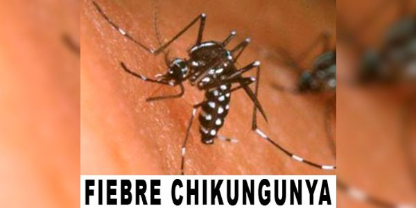 Que es el Chikungunya