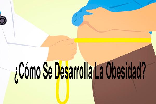 Como Se Desarrolla La Obesidad