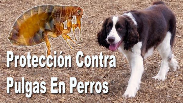 Protección Contra Pulgas En Perros