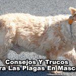trucos y consejos contra las plagas en mascotas